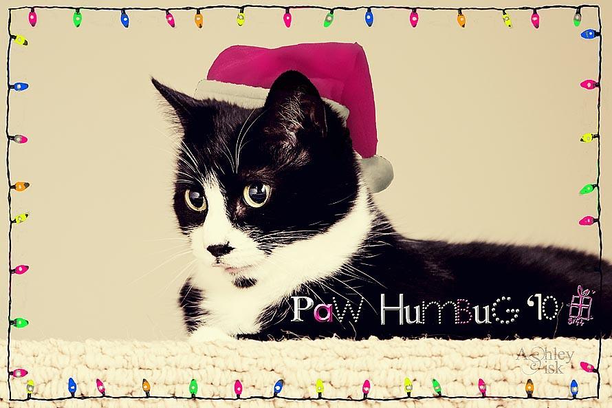 Paw Humbug RS