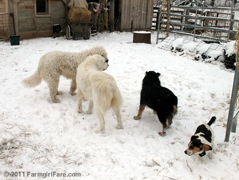 Dogs Playing in the Snow 4