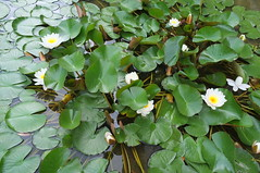 DSCF9194 (ewewlo) Tags: europe bulgaria balchik flower fujifilm x100