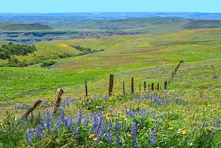 Columbia Hills Wildflowers 985 E
