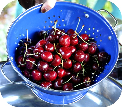 fresh cherries