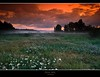 "fairytale (D.Reichardt) Tags: longexposure flowers trees sunset nature colors fog fairytale clouds wonderful germany landscape europe dream moorland gmt stubben notherngermany bokel ""flickraward"" ""flickraward5"""