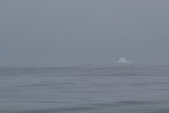 Evidence of a breaching Humpback Photo