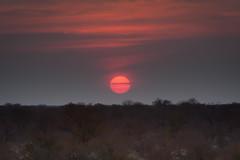 20090823 Etosha 039 (blogmulo) Tags: africa park travel sunset sun sol canon safari viajes national puesta namibia 2009 f28 etosha canon70200 canon450d blogmulo