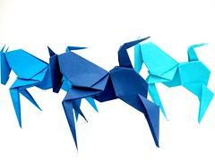 cavalinhos azuis