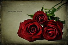Whispers of Passion (~Brenda-Starr~) Tags: theworldwelivein