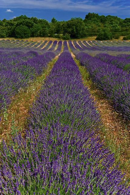 blue france nikon creative lavender provence moment lavande ardeche 50faves creativemoment d40x