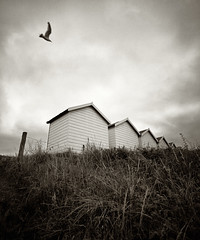 Huts (Andy Brown (mrbuk1)) Tags: roof sky cloud building bird nature grass lines landscape grey fly blackwhite wire triangle exposure moody angle five seagull fineart grain shed wing dream surreal foliage devon repetition bleak bushes beachhuts atmospheric swoop stalks cladding fencepost toning undergrowth dawlishwarren ashen darting