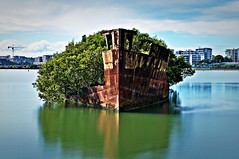 Homebush Bay Shipwreck