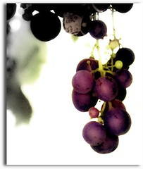 (lucia bianchi) Tags: nature natura raisins september septiembre uva settembre septembre grape
