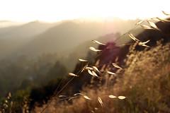 somehwere in the hills (gemmarose.) Tags: california light grass hills earthy fields beverlyhills purdy tones