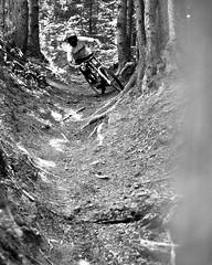 Gully run (sharpneil) Tags: trees blackandwhite bw france neil sharp biking morzine sharpographycouk