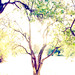 Magic Tree 2