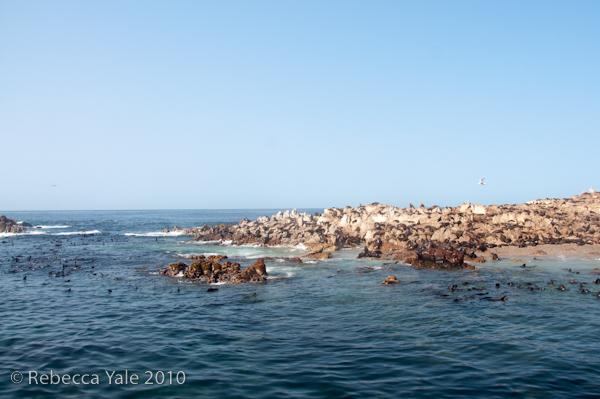 RYALE_Cape_Town-312