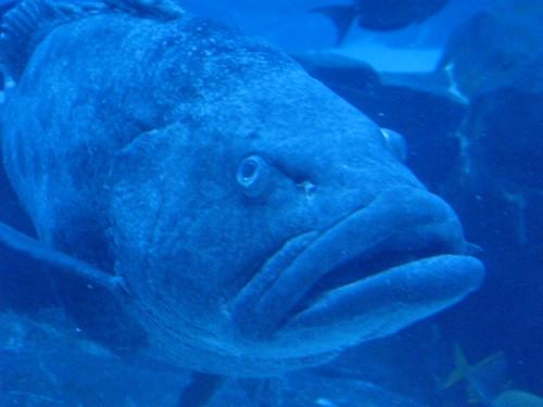 Georgia Aquarium 17