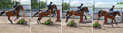 Hunter Judge Canada, Hunter Judge USA, hunter judge, show ring hunter, hunter equitation, what the judge is looking for