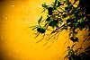 lime tree on summer wall (ion-bogdan dumitrescu) Tags: lebanon beirut bitzi ibdp gettyvacation2010 mg5620edit ibdpro wwwibdpro ionbogdandumitrescuphotography