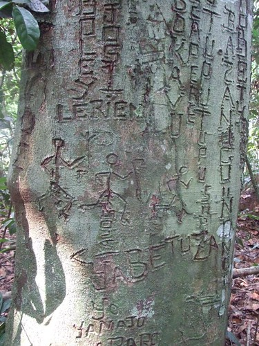grafitti_tree