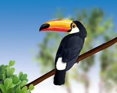 [フリー画像] 動物, 鳥類, オオハシ科, オニオオハシ, 201009250700