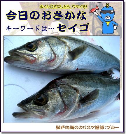 セイゴ 鮮魚 画像