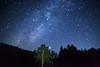 Galactic scarecrow tree (masahiro miyasaka) Tags: blue sky beautiful japan night canon stars outdoors star scarecrow explore galaxy astrophotography 日本 wallpapers oneshot milkyway 夜 startrail 宇宙 银河 earthandsky 星 銀河 exif:iso=3200 Astrometrydotnet:status=failed eos5dmarkⅱ exiff14