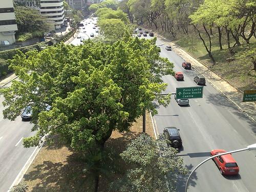 [São Paulo] 23 de Maio vista do Viaduto da Beneficência Portuguesa
