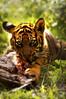 mmm (Tim Geers) Tags: rotterdam blijdorp nikon mmm vlees eet d90 leeuwtje