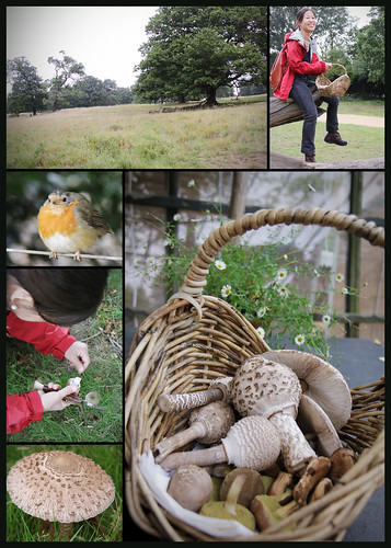 Mushroom hunt in Richmond Park 2