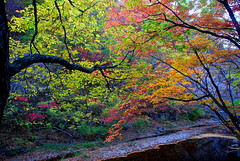 New face in new season (unlimited inspirations) Tags: china park travel pink blue autumn trees red sky orange lake mountains green art love tourism nature water beautiful beauty yellow forest river painting landscape fun leaf maple artwork nikon scenery asia flickr colours shadows seasons best colourful sunlights nikond80  unlimitedinspirations photographyforrecreation artistoftheyearlevel3 artistoftheyearlevel4 artistoftheyearlevel5 artistoftheyearlevel6 rememberthatmomentlevel4 rememberthatmomentlevel1 rememberthatmomentlevel2 rememberthatmomentlevel3 rememberthatmomentlevel5 celebritiesofphotographyforrecreation photographyforrecreationclassic