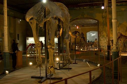 Палеонтологический музей г. Пермь ©  semeonka
