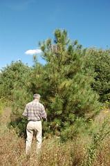"""Black Pine <a style=""""margin-left:10px; font-size:0.8em;"""" href=""""http://www.flickr.com/photos/91915217@N00/4997180213/"""" target=""""_blank"""">@flickr</a>"""