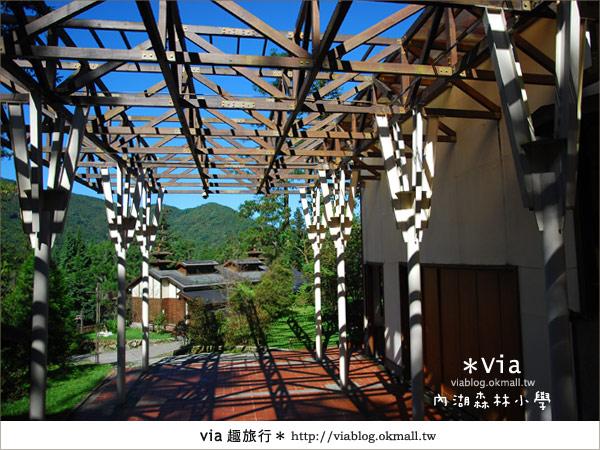 【溪頭一日遊】森林中的夢幻校園~內湖森林小學36