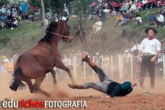 TOMBO 4 (Edu Rickes) Tags: horses caballos rodeo cavalos rs gauchos riograndedosul gaucho rodeio farrapos semanafarroupilha gineteada ginete fotgrafosbrasileiros edurickes fotgrafosgauchos culturagaucha corcovear fotgrafospelotas brazilianphotografers semanafarroupilhadepiratini fotografosportoalegre brazilrodeo