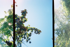 so fresh and so green (greenkozi) Tags: blue trees tree green film leaves 35mm berkeley triptych toycamera bluesky halfframe goldie plasticcamera sunspots sunshaft almostperfect goldenhalf lovethewaythislinedup