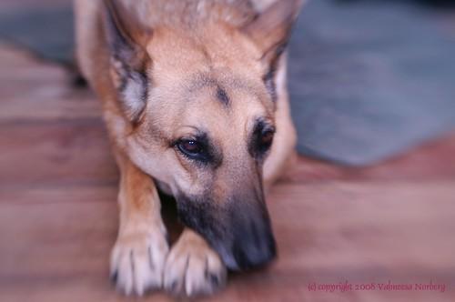ScoobyLB03-2008