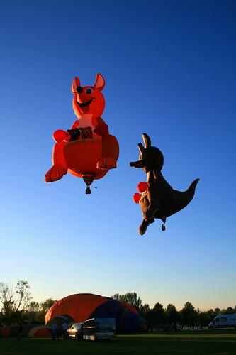 Mongolfiere a forma di canguro in volo a Ferrara Balloons 2010