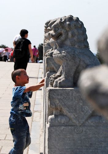t8 - Lion Fascination