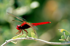Menorcan Insects (Paddywac (Marty)) Tags: insects menorca sonya330