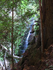 Big Basin/Berry Creek Falls