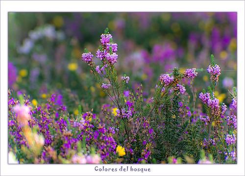 Colores del bosque... 1