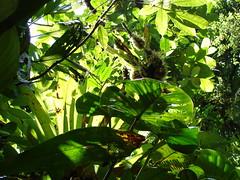 Parque Nacional Braulio Carrillo_Costa Rica (Jardn Botnico Nacional, Via del Mar, Chile) Tags: costa rica carrillo braulio brulio