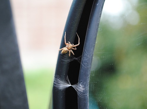 Spider on my wing-mirror