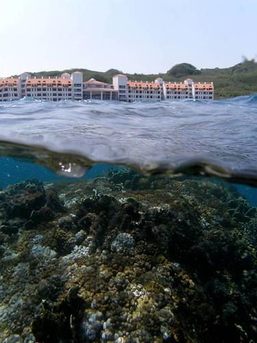美麗灣前50公尺處就有珍貴的珊瑚礁 (中央研究院生物多樣性研究中心 珊瑚礁演化生態與遺傳研究室提供)