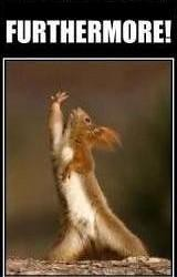 furthermore! the ranting squirrel