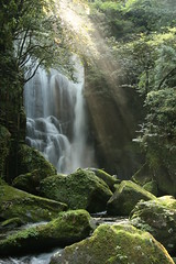 How Can You Improve a Waterfall? (AJ Brustein) Tags: light green japan forest canon aj waterfall moss rocks no falls  rays cascade    mie wakayama taki  30d   brustein     kuwanoki