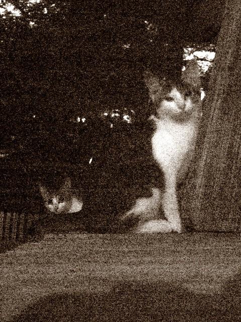 Today's Cat@2010-10-04
