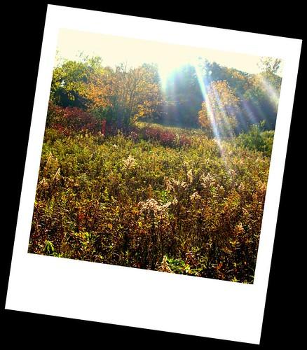 A Fall Scene