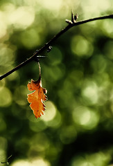 Autumn (San Panteno) Tags: autumn orange green nature leaf alone bokeh     d90