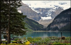 Lake Louise, Banff National Park. (kfrombrissie) Tags: flowers snow canada mountains reflection water rockies glacier alberta rockymountains lakelouise fairmont banffnationalpark fairmonthotel chateaulakelouise victoriaglacier