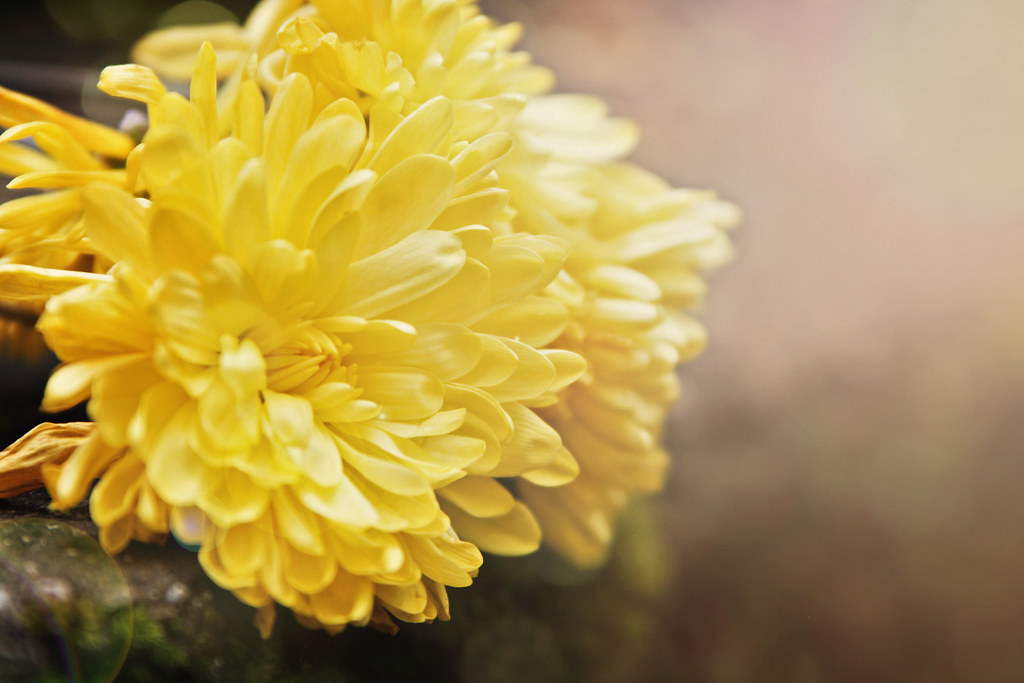 Flower - Simplicity